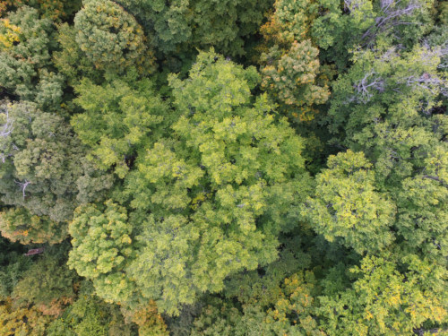 Mile-Around Woods tree canopy from above.