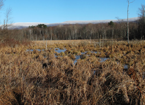 Wetland in winter.