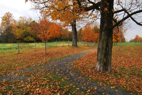 Grove Road, October 2014.