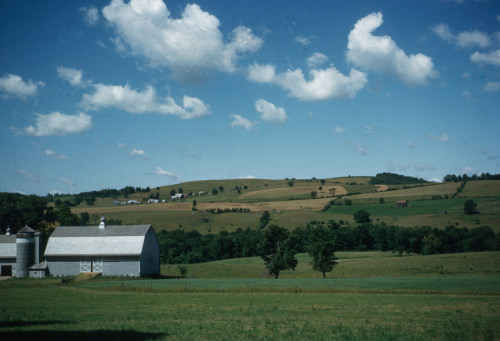 Harrington Farm, 1950s.