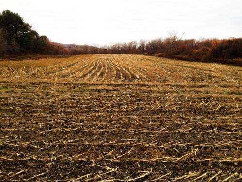 November fields.