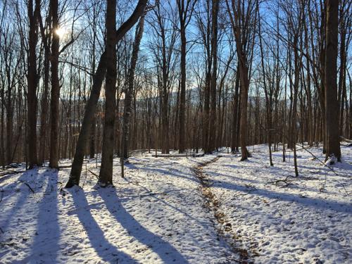 Short Aldrich Trail, looking toward Mt. Anthony.