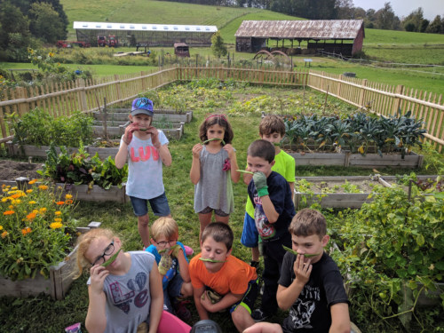 Village School students at the community garden.