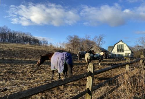 Taradan riding stables