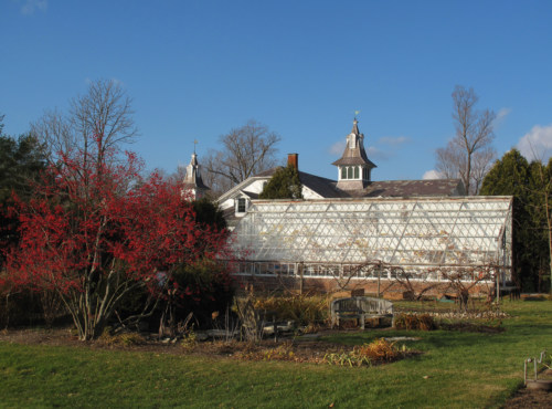 The Grapery in the Hiland Hall Garden before restoration.